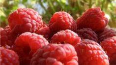 ZMEURA Ce efecte uimitoare pentru sănătate are acest fruct http://www.realitatea.net/zmeura-ce-efecte-uimitoare-pentru-sanatate-are-acest-fruct_954424.html#ixzz1yPd6jjPA