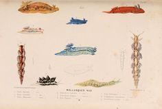 Le monde de la mer .... Paris,L. Hachette & Cie,1866.. biodiversitylibrary.org/page/2073345
