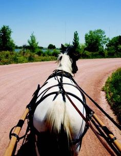 9d953cd348c618f0df74439d8efcc707 parts to a team harness from cedar knoll draft horses big boys