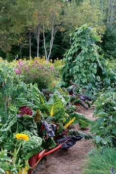 40 garden tips to help you maximize your harvest. Mother Earth News