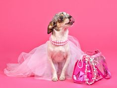 www.pamperedpetstravel.com  #travel #trip #traveling #PetTravel #dog #dogs #puppy #puppies #pet #pets #cute #CuteDog #pink #girl #girly #fashion #style
