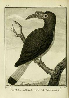 Voyage à la Nouvelle Guinée - Biodiversity Heritage Library. Antique natural history bird art.