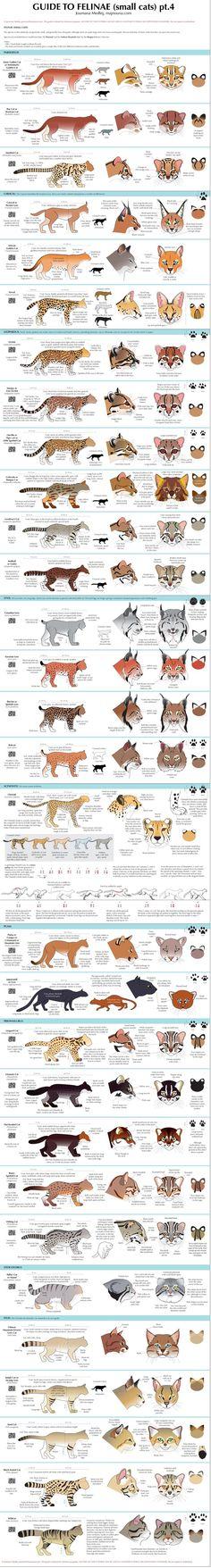 Guide to Felinae (pt4)