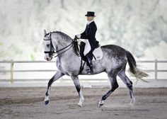 Ridiculously handsome pre stallion.