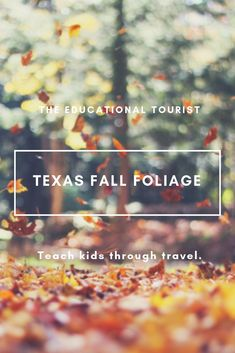Texas fall foliage: Gorgeous fall foliage can be seen in the south! Visit the state parks: Lost Maples, Daingerfield, Lake Bob Sandlin, and Cooper Lake. Camping With Kids, Travel With Kids, Family Travel, Texas Tourism, Texas Travel, Destinations, Catfish Fishing, Road Trip Games, Sea To Shining Sea