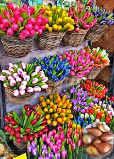 2pcs True Tulip Bulbs (not Tulip Seeds) Flower Bulbs Tulips Rhizome Outdoor DIY Plant Bonsai Pot for Bulbs Home Garden #>=#>=#>=#>=#> Click on the pin to check out discount price, color, size, shipping, etc. Save and like it!