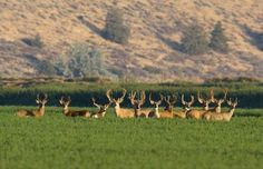 Mule Deer Photo by Terry Spivey -- National Geographic Your Shot
