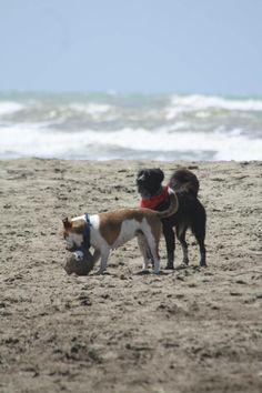 Baubeach. The beach for dogs