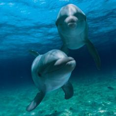 Swim with the Dolphins on your vacation to Cancun
