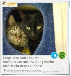 Tarzan&Jane kamen über das Veterinäramt wegen schlechter Haltung zu den Tierhelfern Ingelheim.  http://www.tierheimhelden.de/katze/tierheim-ingelheim/ekh/tarzan_&_jan/13199-1/  Die beiden werden immer zutraulicher und geni0en auch schon die ein oder andere Streichkleinheit. Die beiden verstehen sich sehr gut und werden daher v.a. zusammen in ein liebevolles Zuhaus