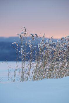 mydearmilo: snow covered (via imgTumble)
