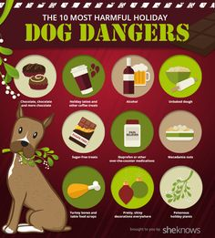 the most dangerous holiday things for your dog. be careful!