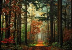 """<a href=""""http://larsvandegoor.com/product/calendar-2017/"""">Order Now Calendar 2017!</a> One of the images appearing on my new Calendar 2017 A walk in the Woods made and published by Dumont in Germany. I am very satisfied with the printing quality in this large calendar. Size 58.4 x 48.5 cm. Click link above or below to purchase or to watch the other content <a href=""""http://larsvandegoor.com/"""">LARSVAND..."""