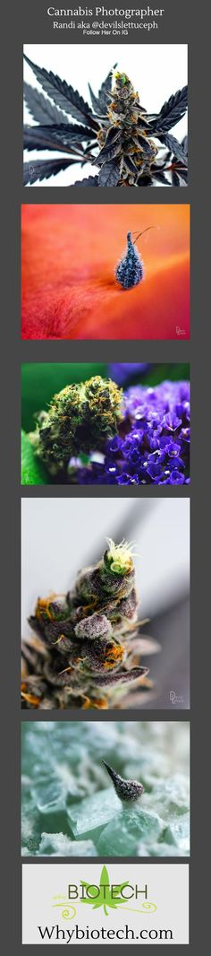 Best Cannabis Photos 2018 - Council Of Cannabis CBD Biotechnology