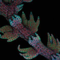 Photomicrographer: Robin Young, University of British Columbia, Canada  Specimen: Intrinsic fluorescence in Lepidozia reptans (liverwort) (20X)  Technique: Live mount, confocal microscopy