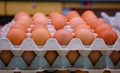Ovos de granja e orgânicos: entenda as diferenças