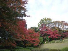 「Kyu-Furukawa Garden」 Tokyo Japan