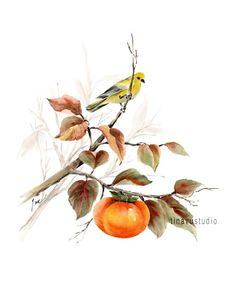 Bird and persimon, bird art, fruit artwork, Watercolor bird print. Watercolor Trees, Watercolor Artists, Watercolor Paintings, Watercolor Portraits, Watercolor Landscape, Anime Comics, Cactus Art, Fruit Art, Small Art