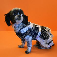 Khaleesi looking cute in this black & white polka dot dress! www.fetchdogfashions.com #puppy #dog #dogclothing #dogfashion #dogapparel #dogboutique #dogcouture #shihtzu