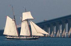 Tall Ship, Lynx, coming through the Skyway Bridge. Sailing Yachts, Sailing Ships, Nautical Terms, Classic Sailing, Adventure Of The Seas, Sail Boats, Tall Ships, Bridges, Old Photos