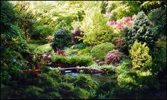 gardens in forest - Google Search