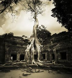 Ta Prohm at the Temples of Angkor in Cambodia. My vote for coolest temple there. Photo by Ian Brewer. Oh The Places You'll Go, Places To Visit, Angkor Wat Cambodia, Temple Ruins, Best Scuba Diving, Koh Chang, China Travel, China Trip, Southeast Asia