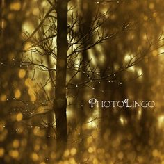 Fine Art Photography Tree Branches Rain Drops Bokeh by PhotoLingo, $15.00 Trees, Branches, Rain Drops, Bokeh, Light, Nature, Photography, Gold, Art, Print, Wall Art, Wall Decor, Home Decor