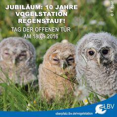 Der Neubau unserer LBV-Vogelstation in #Regenstauf am Masurenweg wird 10 Jahre alt! Das wollen wir mit euch am 18.09.2016 -  als heute in einer Woche - beim Tag der offenen Tür feiern. Mehr Infos auch unter www.oberpfalz.lbv.de  Wir freuen uns auf euch!  #vogelstation #vögel #wildvogelhilfe #wildvögel #kauz #waldkauz #vogelkrankenhaus #oberpfalz #bayern #bavaria #tagderoffenentür #vogelhilfe #bird #birds #vogel #ehrenamt #jubiläum #feiern