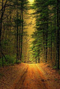 Maravilhoso caminho...