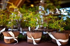 Wedding favors - plant a tree - burlap. They gave saplings to each guest as a favor to symbolize the way their love would grow over the years. Plant Wedding Favors, Edible Wedding Favors, Wedding Favors Cheap, Wedding Ideas, Wedding Stuff, Wedding Inspiration, Wedding Things, Wedding Centerpieces, Wedding Gifts For Guests
