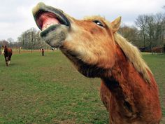 Laughing horse in Winterswijk by zwedendejong