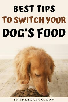 It's best to consider what the reasons are if your dog is still not taking to their food.It'll get easier to judge how your dog is reacting to a change in food the more you know them.If you're ready to switch up your dog's food, we have tips on how to make it easier to make the transition. #dogsfood #dogtips #dognutrition #doghabits