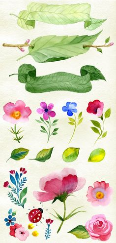 Watercolor flowers + patterns - Illustrations - 2
