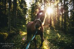 horse forest sun light
