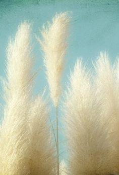 Lovely Wild Grasses