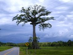 Ecoturismo   Paisajes Naturales del Caquetá - Page 6 - SkyscraperCity Natural, Wind Turbine, Colombia, Scenery, Pictures, Nature, Au Natural