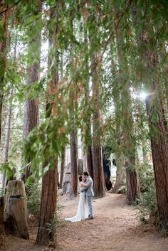 YMCA Boulder Creek: redwood grove Jewish wedding // Vivian Chen Photography // www.vivianchen.com