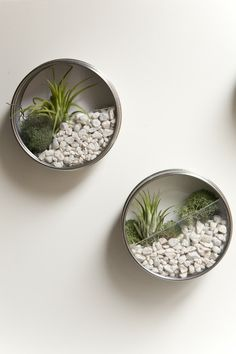 easy air plant @Emily Schoenfeld Schoenfeld Schoenfeld Finch, I have little magnetic canisters I could do this with the boys for their room.  So easy and adds a little green to their space :D