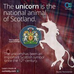 The unicorn Scottish Symbols, Scottish Words, Scottish Quotes, Scotlands National Animal, Scottish Referendum, Scotland Funny, Celtic Nations, Discovery Channel Shows, Scottish Independence