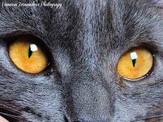 Photograph Joplin's eyes by Vanessa Fernandes on 500px