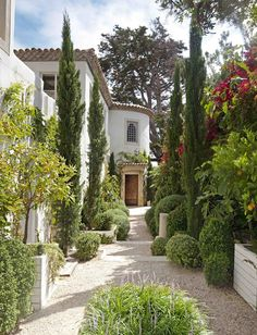 Courtyard with citrus trees, cypress and crushed stone.