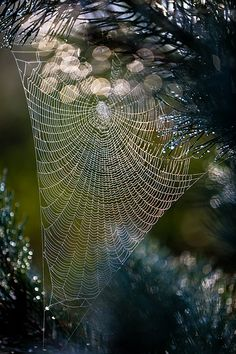 Amazing Spider Web in the morning dew All Nature, Amazing Nature, Spider Art, Spider Webs, Patterns In Nature, Amazing Spider, Oeuvre D'art, Belle Photo, Beautiful World