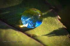 La vie tient dans une goutte d'eau. / Nature's Teardrop / By Betsy.
