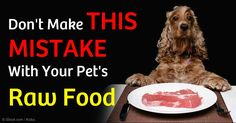Raw pet food is good, but you should make sure that the organic pet food or homemade pet food you choose has the right nutritional balance. http://healthypets.mercola.com/sites/healthypets/archive/2011/09/01/serious-mistake-with-pets-raw-food.aspx