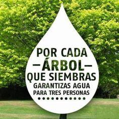 frases del cuidado de la naturaleza para carteles