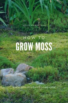 If you are looking for an eco-friendly alternative to grass and seriously feel the winter doldrums when your greenery turns brown with the changing seasons, a moss garden might be right for your yard. Shade Garden, Garden Plants, Air Plants, House Plants, Indoor Garden, Moss Lawn, Moss Grass, Grass Alternative, Types Of Moss