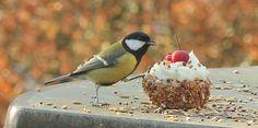 Vogels - Vogeltaart.nl Vogeltaarten Boek....hoe maak ik een natuurlijke vogeltaart Great Tit, Bird Cakes, Little Birds, Bird Feeders, Parrot, Berries, Garden, Outdoor Decor, Flowers