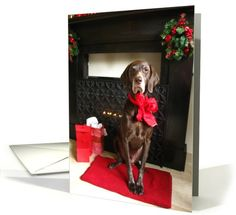 waiting for santa... card Warm wishes from a wet nose!    Happy Holidays!