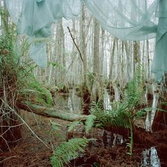 """""""marjory's world"""" series by rebecca reeve"""