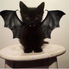 Hallowen <3 ******
